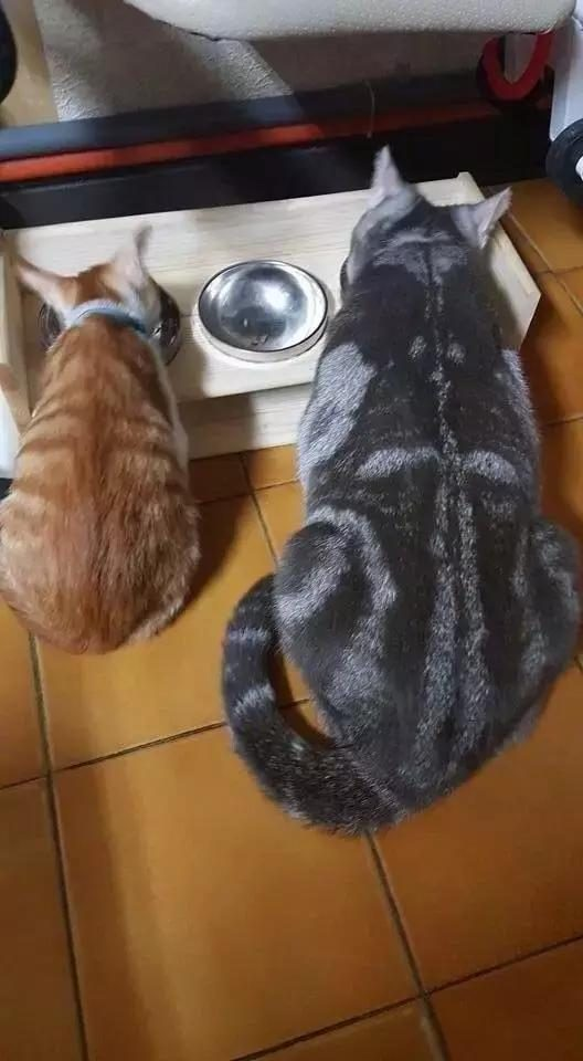 Funny GIF diagram: orange cat is a kind of existence?