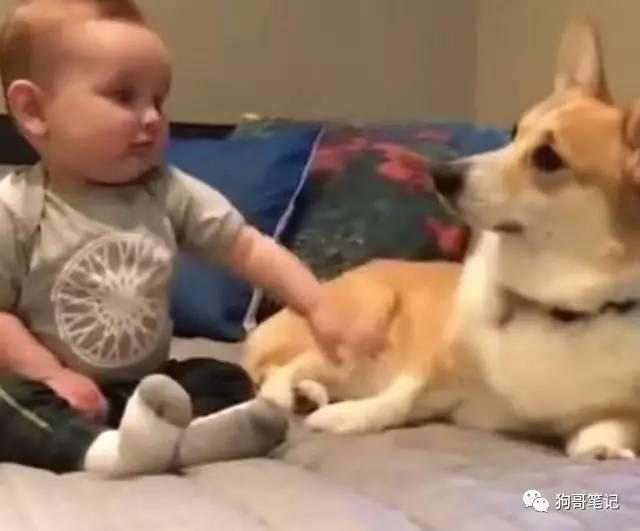 Baby want to touch the stars, did not expect the dog also pretending to be reserved