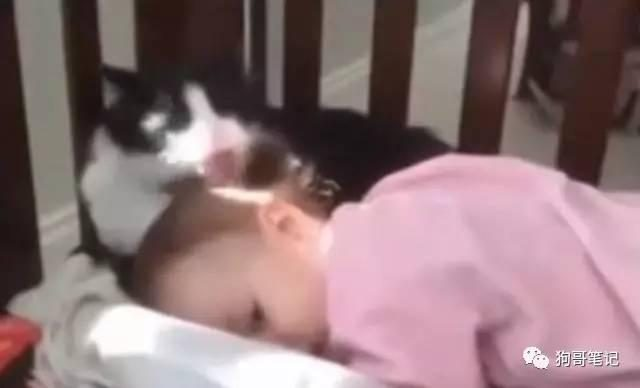 The cat that the baby fell asleep stole a pro, the results of the child reaction light
