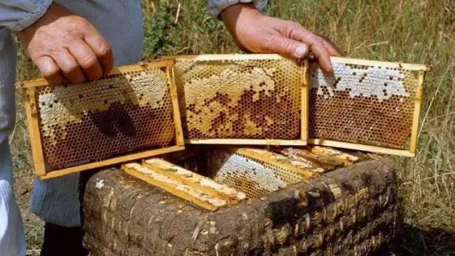 Domestic honey embarrassment: no one to buy domestic exports no one wants!