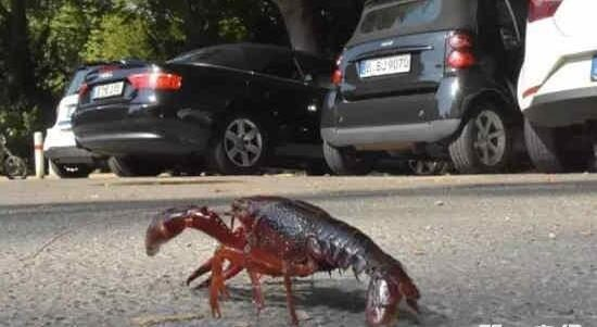 German crawfish flooding The government allows people to catch food