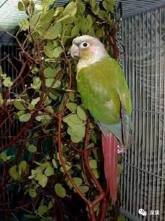 The parrot case party released from prison: plan to appeal, do not reject the foster parrot