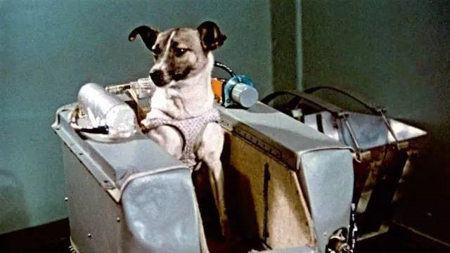Unbelievable!  The first person to enter space is not a human being, but a dog?  It still wanders in space