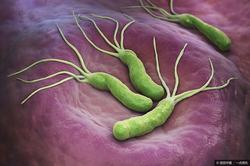 Helicobacter pylori can't always be killed, the medicine may be wrong.