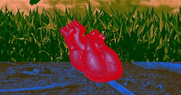 Scientists turn on artificial hearts: beating like real