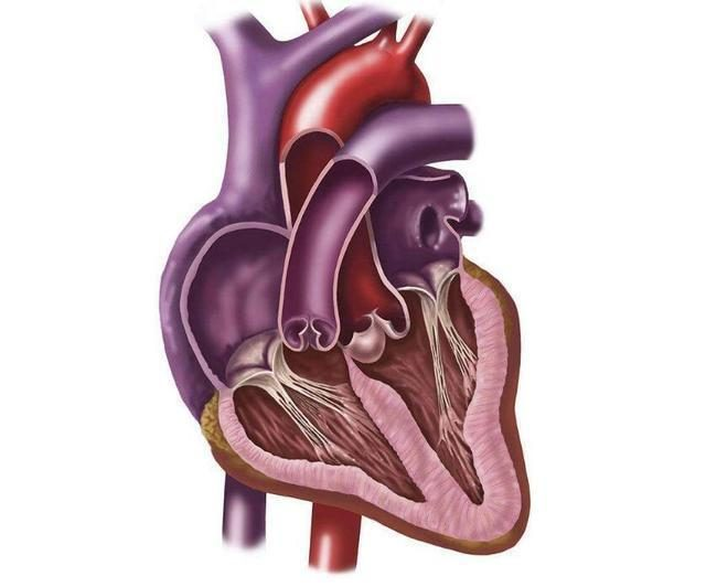 If the heart is good or not, you will know how to maintain your heart and keep in mind that
