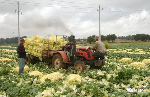 这个山东农民年入4.8亿,把菜卖到了迪拜,被马云邀请进湖畔大学。
