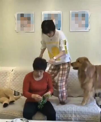 母女俩干架 金毛狗看到后不仅没帮自己的主人 还对主人这样做!-图片1