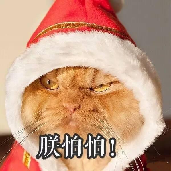 貓咪也能共享了一天39.9就可擼貓,為什么會遭萬人唾棄?