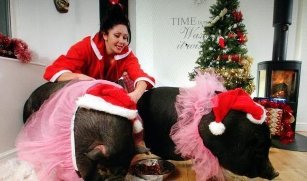 美国女孩迷你猪当宠物,不料养成了大肥猪