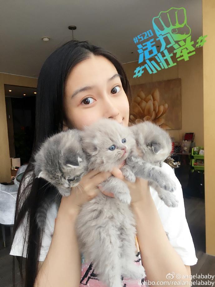 霍思燕的泰迪600万不卖 baby因养猫被骂无脑 扒一扒女明星的萌宠们