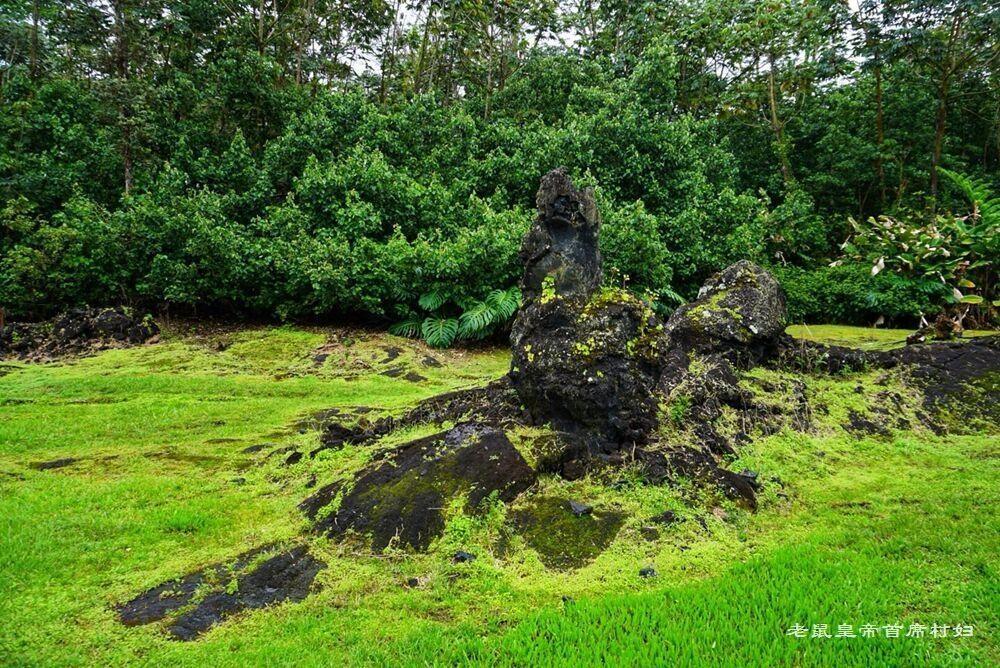 探秘夏威夷:火山熔岩毁灭森林,场面惨烈细思极恐,不看会遗憾 - 老鼠皇帝首席村妇 - 心底有路,大爱无疆