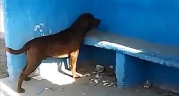 狗狗连续多日盯着蓝墙,没有人知道为什么