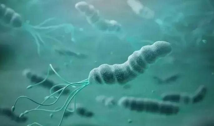 活性益生菌