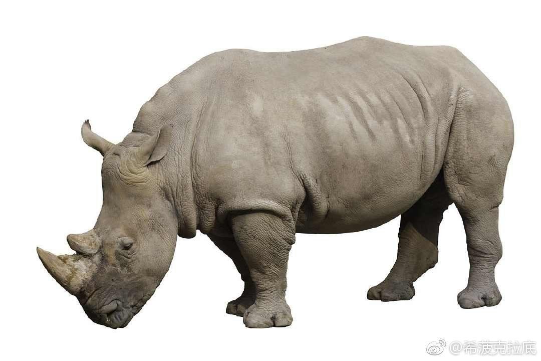 班长观点:权健事件是典型的灰犀牛事件