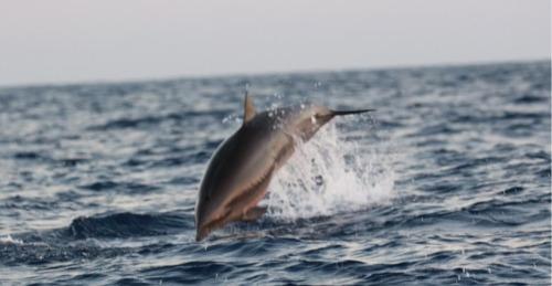 深海所完成南海深潜鲸类科考航次