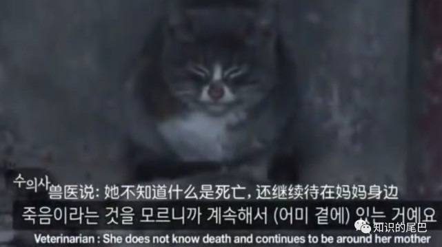 她把撿到的肉給媽媽,自己吃樹皮石頭,卻不知媽媽已經死了