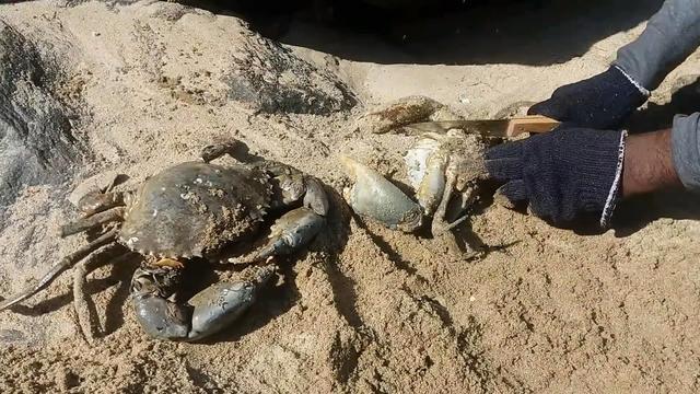 在海邊捕捉的螃蟹做成美食, 把網友逗笑了
