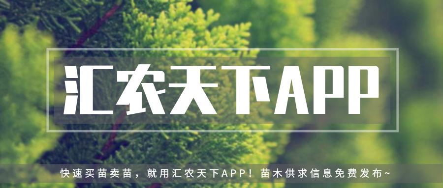 干货   园林树木黄化病的综合防治