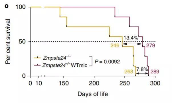 百歲有望!《Nature》子刊:長壽老人的益生菌可以延長13.4%壽命
