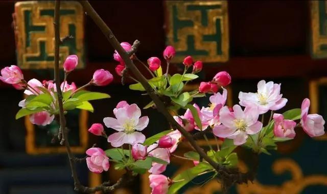 美文欣赏:岁月馨香,温暖你的时光