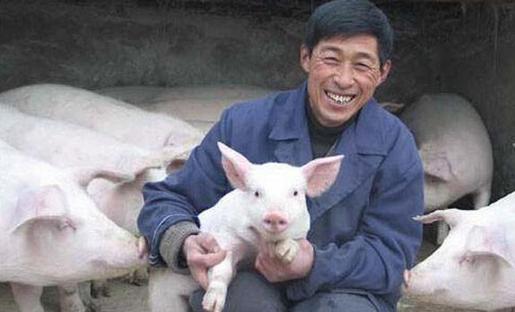 缺猪,致猪价接连上涨,那么,谁才是背后最大的赢家呢?