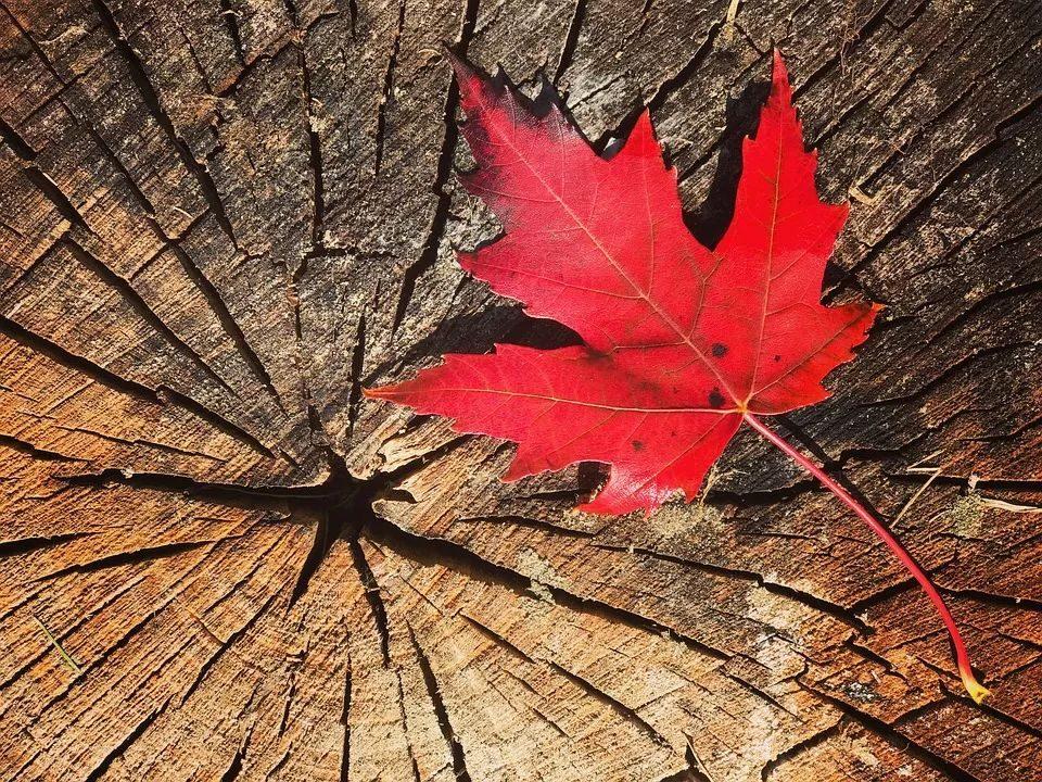 在多元化的加拿大,这些不能做的事,你知道吗?