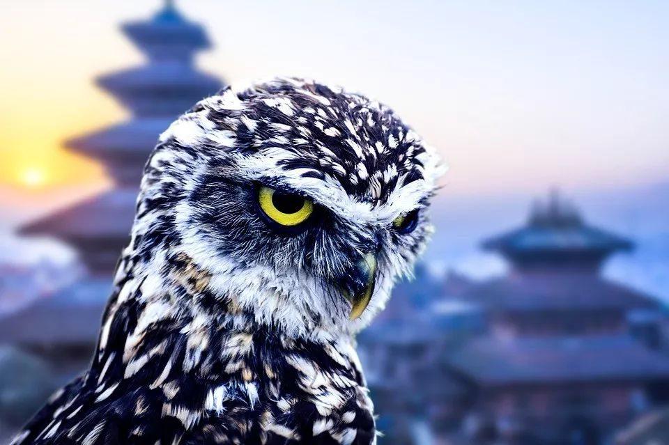 【投资理财】沈建光:如何看待近期密集发力的政策面?