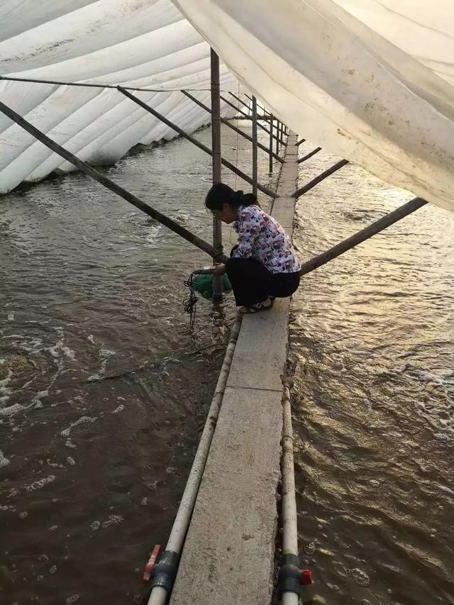 硝酸盐和亚硝酸盐是进行水产养殖必须要解决的问题