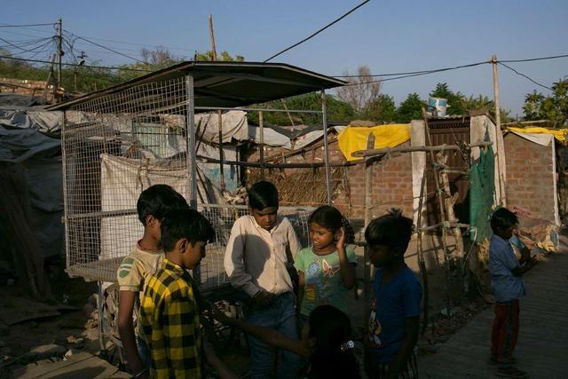 印度两名孩童在公共街区大便,被当街乱棍暴打,双双抢救无效死亡