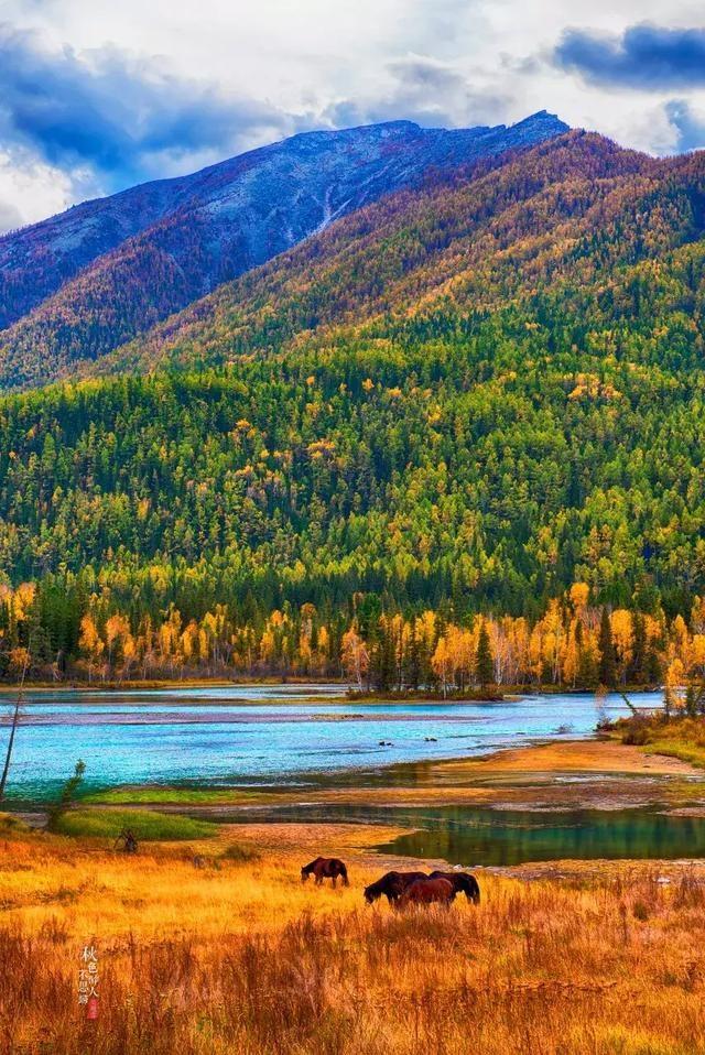 新疆阿勒泰深山密林中,找到了中國最美秋色NO.1