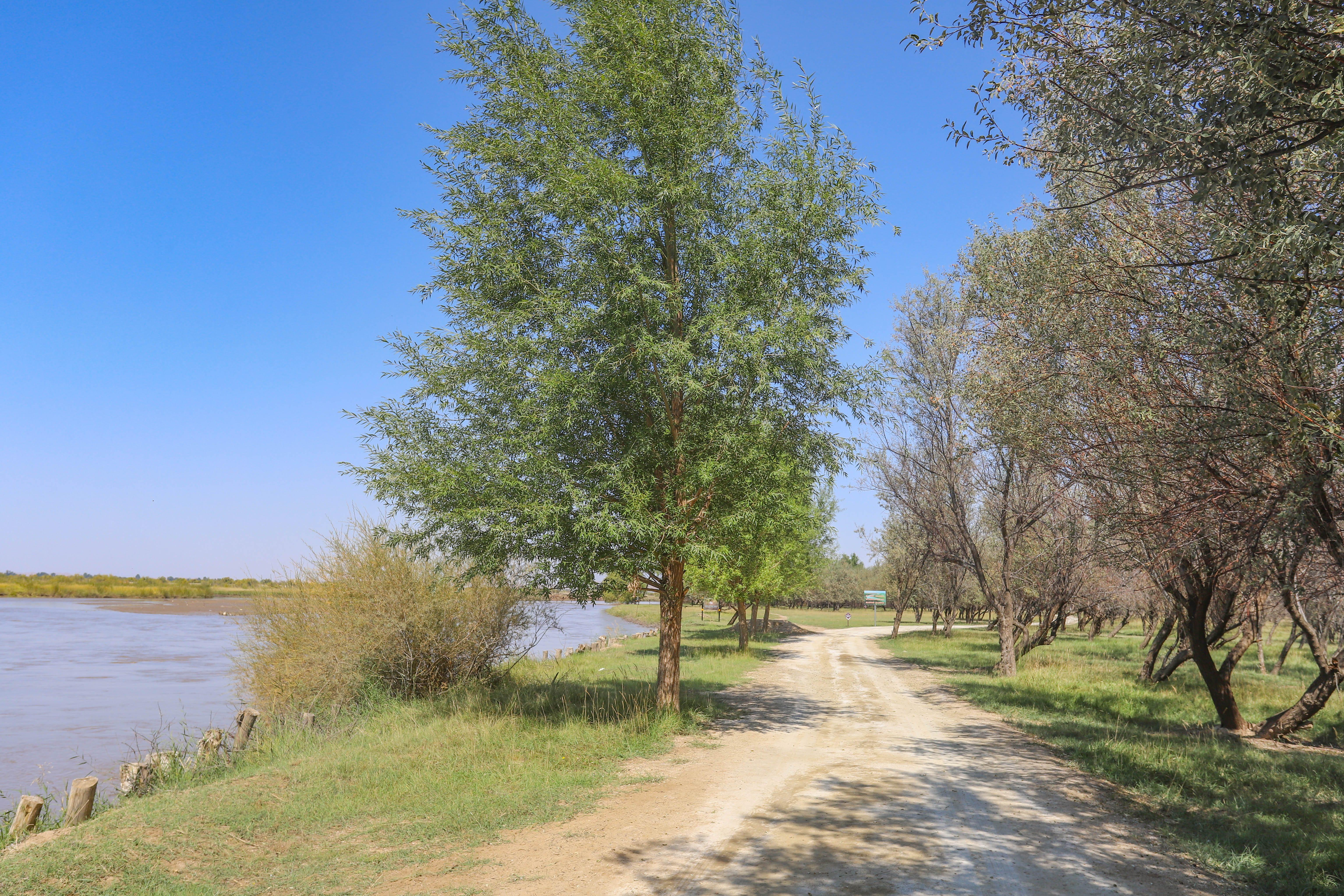 甘肅一小縣城,被兩大沙漠包圍,治沙綠化堪稱世界模范