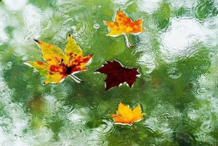 何问梁园旧宾客_秋雨微凉,三十五句诗词,带你看尽秋雨之美- 诗词点评