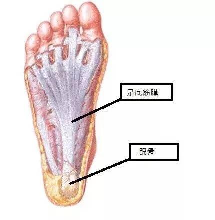 推薦三個步驟改善足底筋膜炎