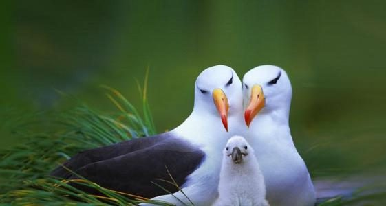 养鸟人不知道的冷知识,麻雀不是一种鸟,40斤重的鸟也会飞?(图4)