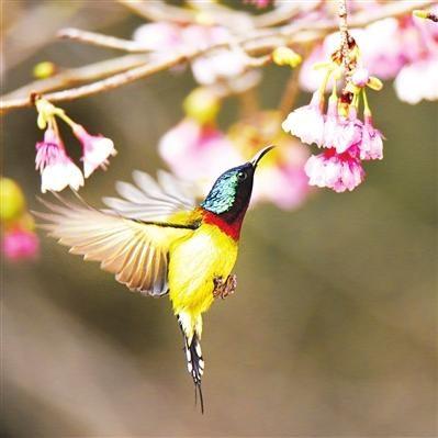 养鸟人不知道的冷知识,麻雀不是一种鸟,40斤重的鸟也会飞?(图9)