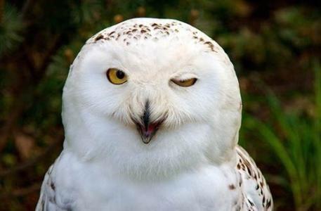 养鸟人不知道的冷知识,麻雀不是一种鸟,40斤重的鸟也会飞?(图10)