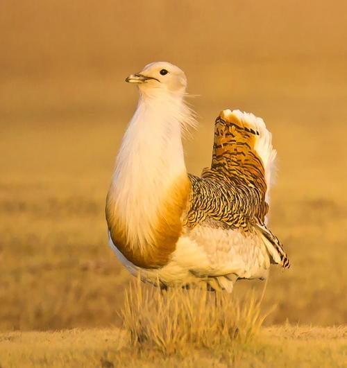 养鸟人不知道的冷知识,麻雀不是一种鸟,40斤重的鸟也会飞?(图3)