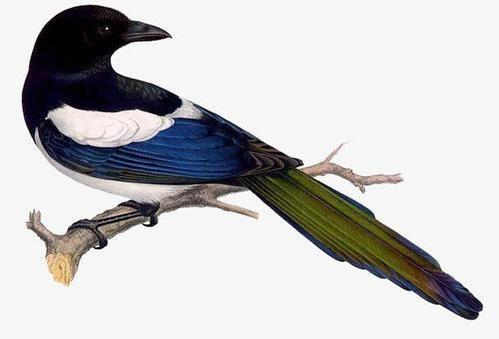 养鸟人不知道的冷知识,麻雀不是一种鸟,40斤重的鸟也会飞?(图1)