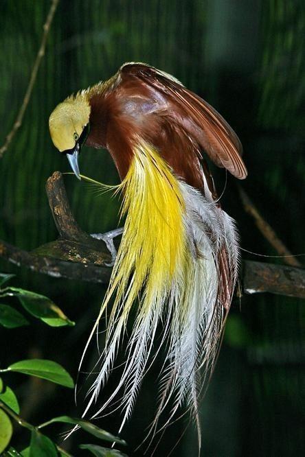 养鸟人不知道的冷知识,麻雀不是一种鸟,40斤重的鸟也会飞?(图8)