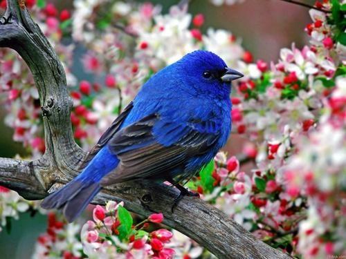 养鸟人不知道的冷知识,麻雀不是一种鸟,40斤重的鸟也会飞?(图6)