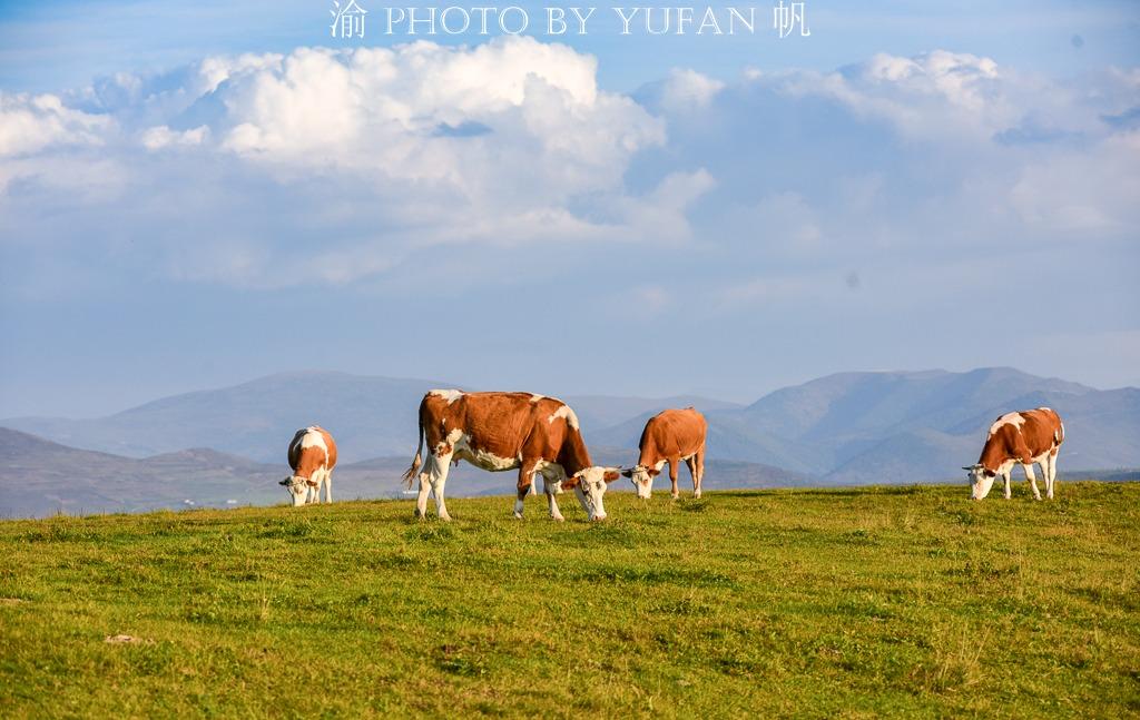 中國深呼吸第一城有片高山草原,不僅美如畫卷,還可眺望朝鮮惠山