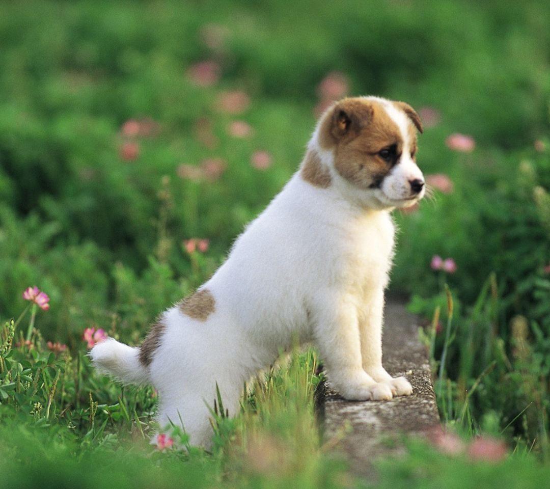 上海做代孕哪里里便宜:狗狗多大才算是成熟?生殖、身体、心理各不一样