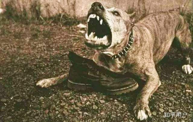 如何看待愛狗人士圍堵四川收狗點?