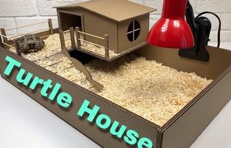 如何用纸板给乌龟DIY一个游乐场