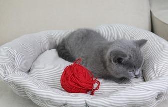 舊衣服簡單改改變身小貓睡床
