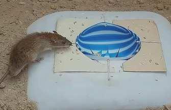 用塑料球自制的捕鼠器
