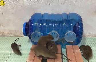 旧水桶废物使用克己的捕鼠神器