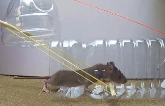 利用塑料桶制作DIY捕鼠器
