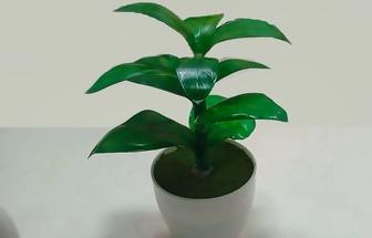 塑料瓶DIY翠綠富貴竹盆栽